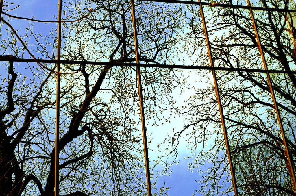 A Spring Window Reflection
